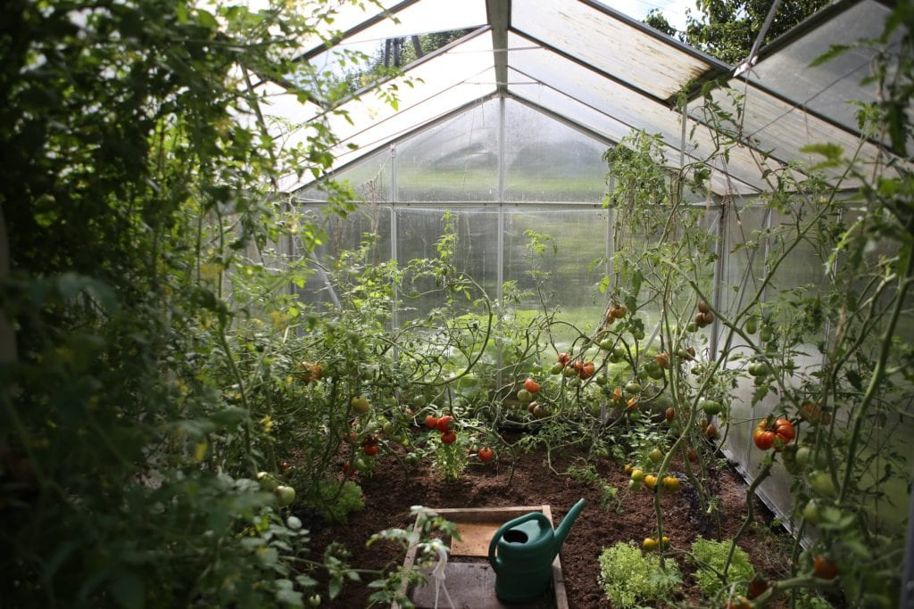 greenhouse with tomatoes and many other beautiful plants for chicago gardening law article