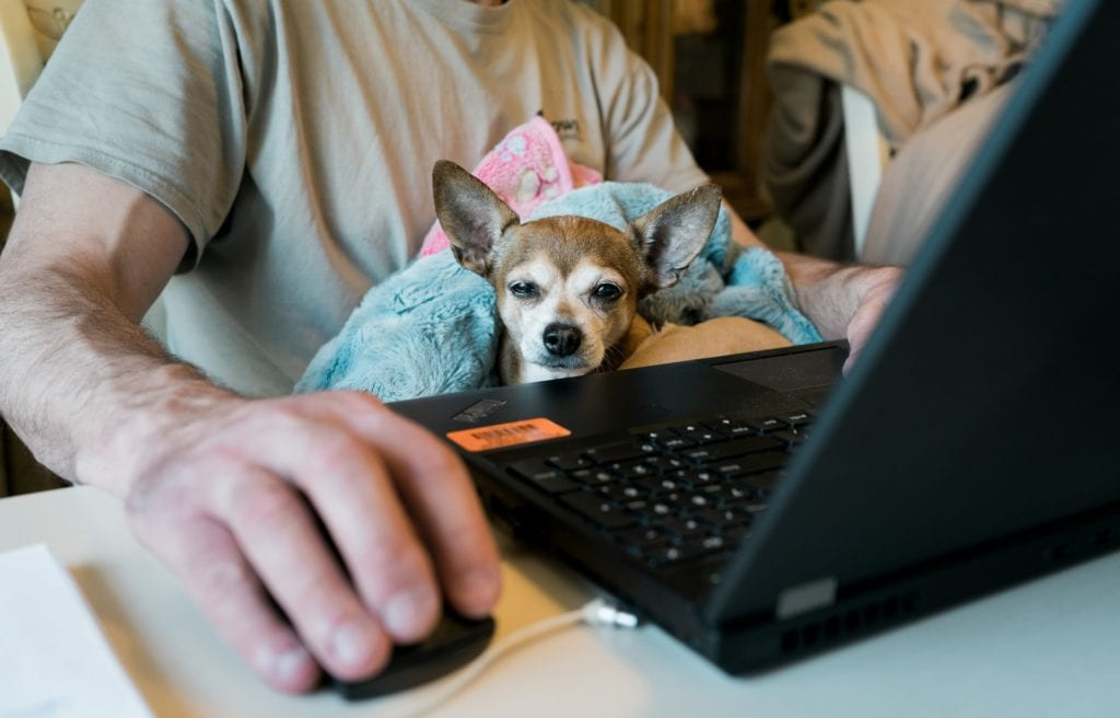 dog at a computer for work from home real estate article